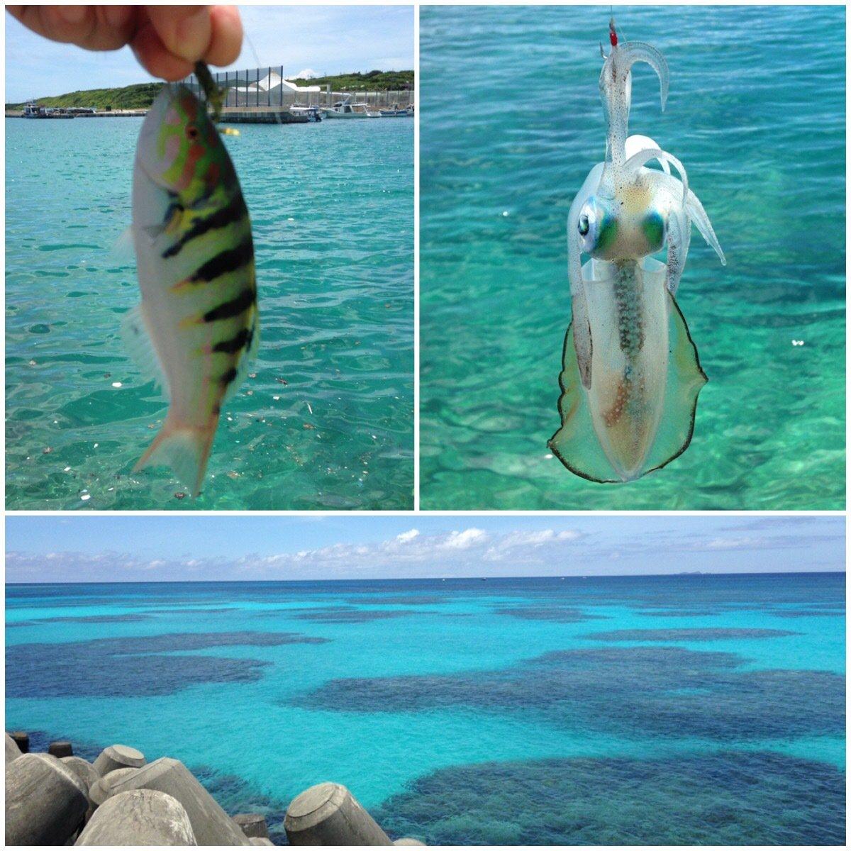 釣り吉八平さんの投稿画像,写っている魚は