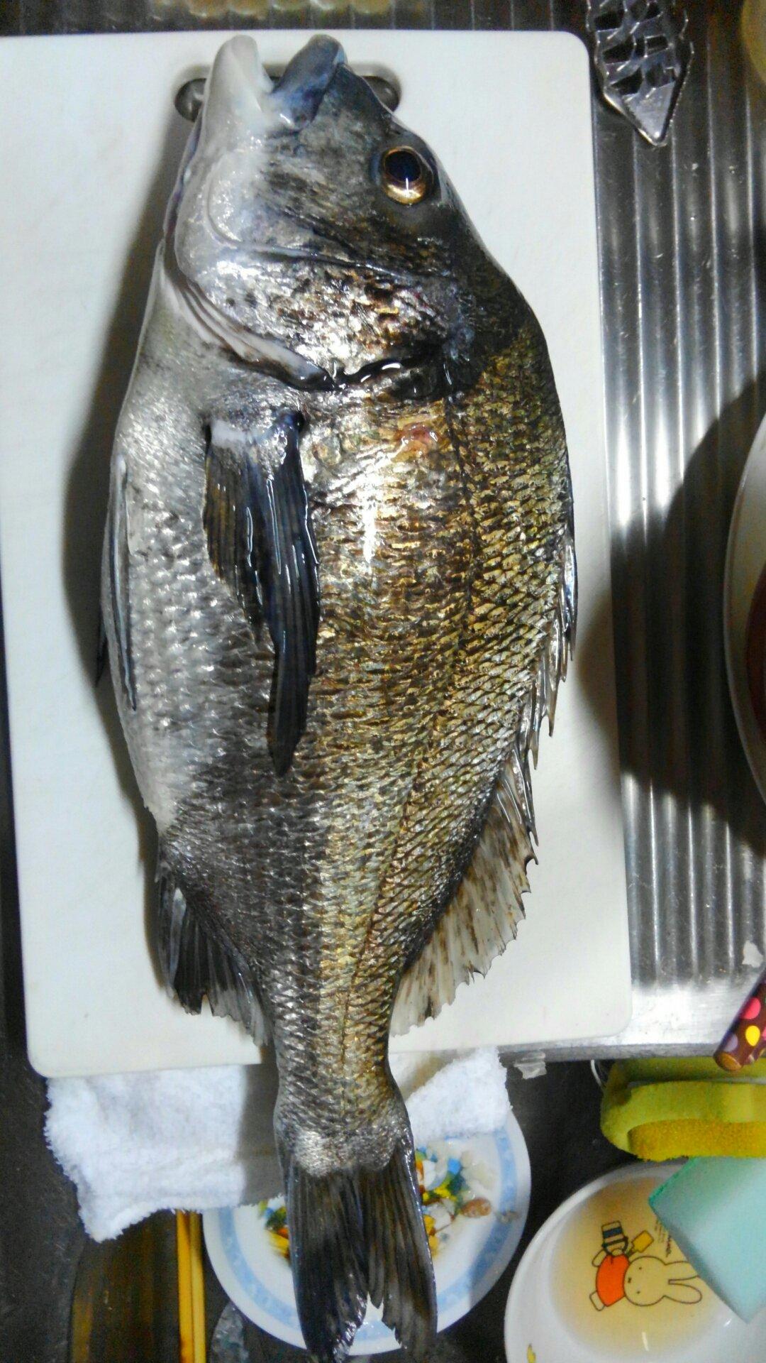 ミヤビパパさんの投稿画像,写っている魚はクロダイ