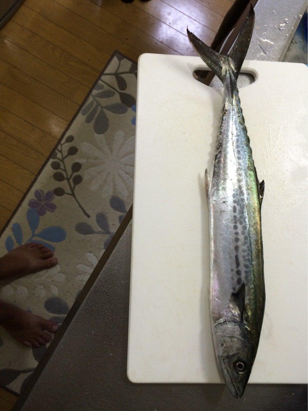 ヒーデさんの投稿画像,写っている魚はサワラ
