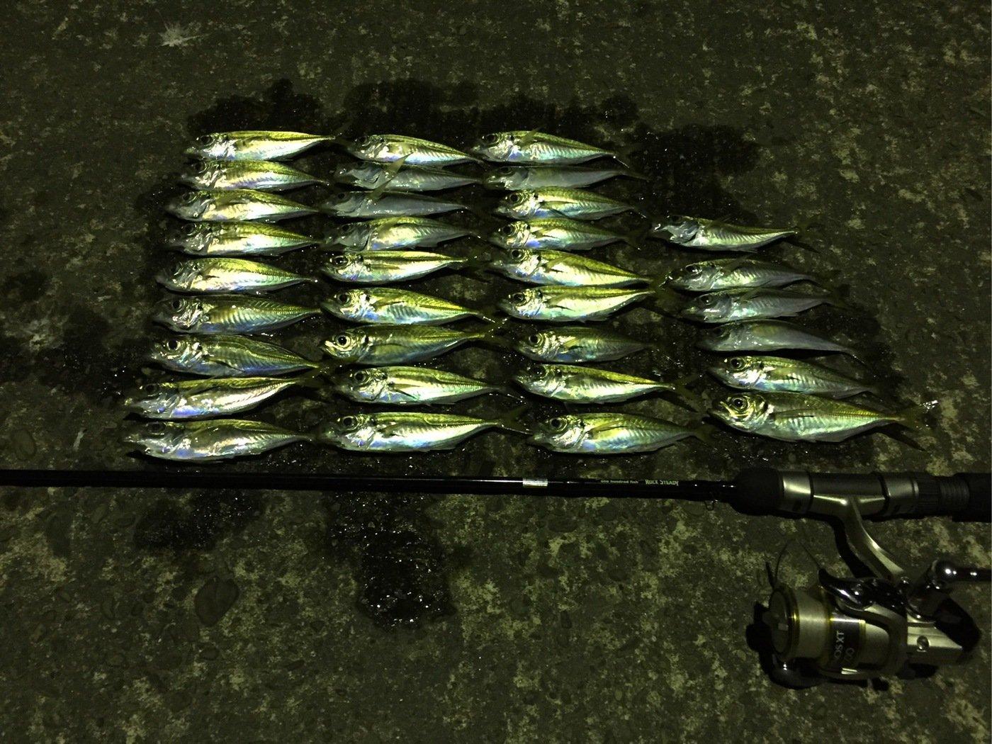 MSKさんの投稿画像,写っている魚はアジ