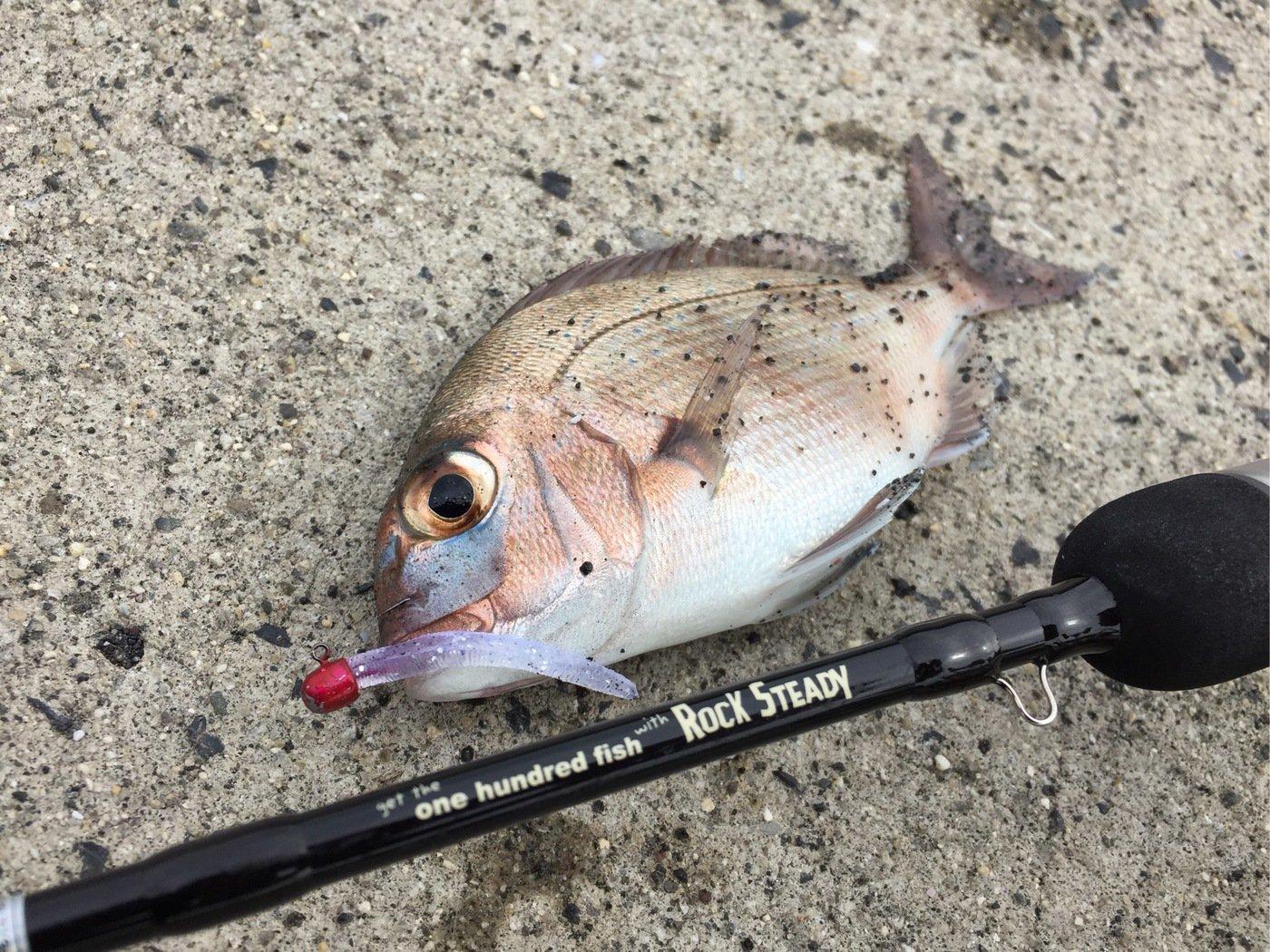 MSKさんの投稿画像,写っている魚はマダイ