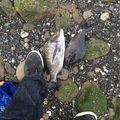 メジナさんの千葉県館山市でのクロダイの釣果写真