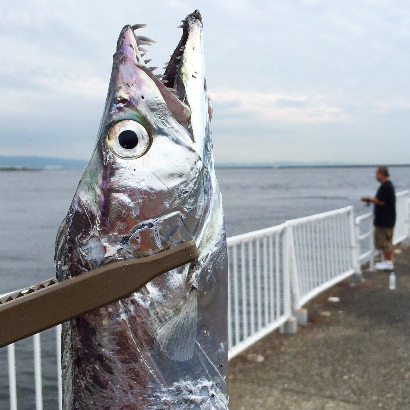 MSKさんの投稿画像,写っている魚はタチウオ