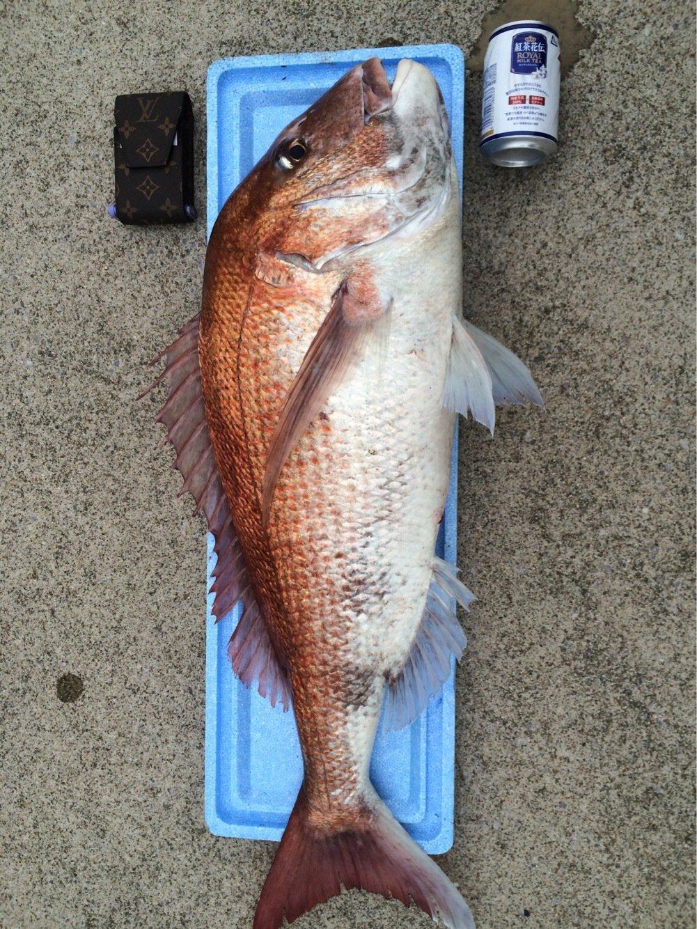 吉川聖間さんの投稿画像,写っている魚は