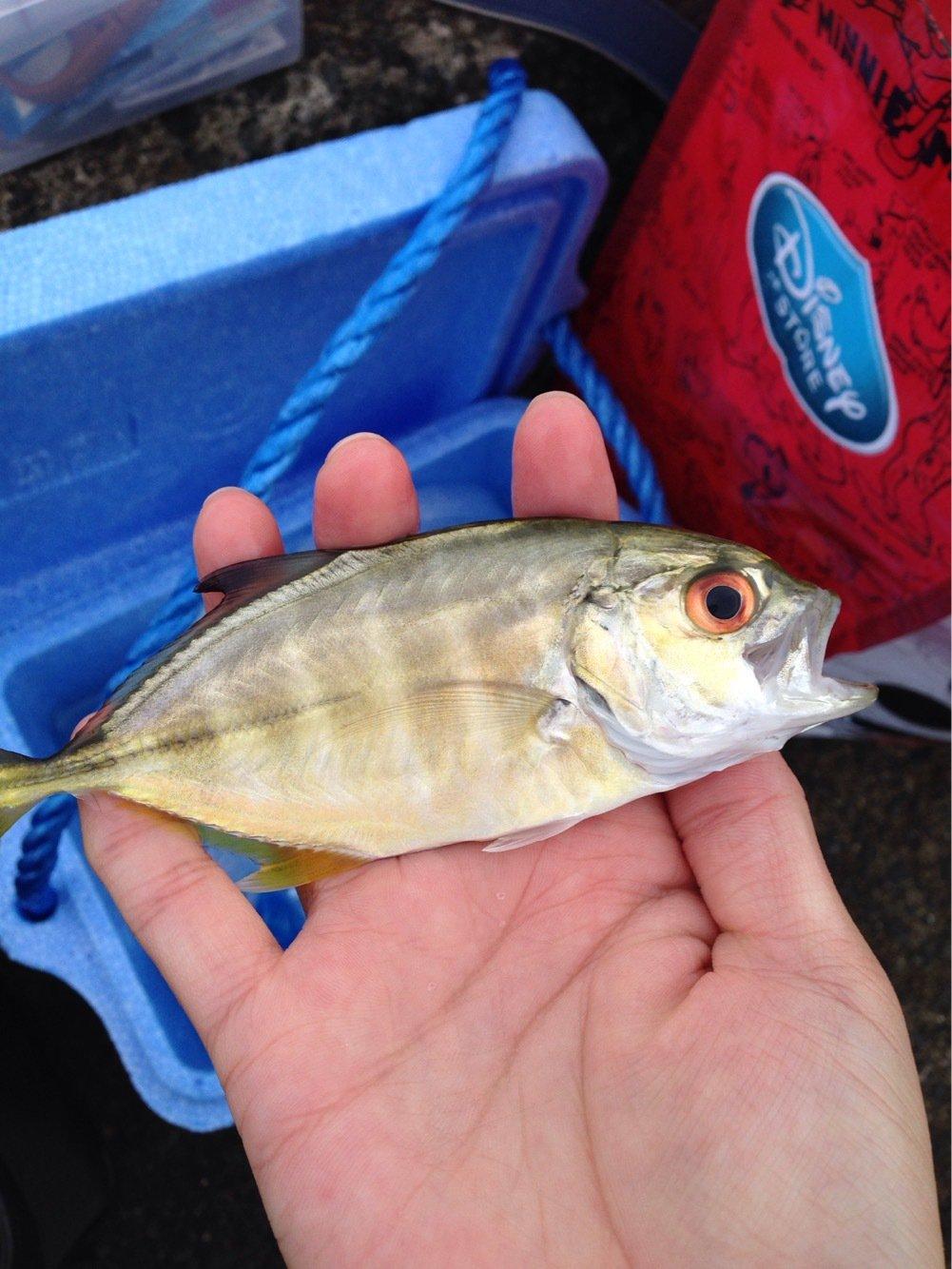 はーさんの投稿画像,写っている魚はギンガメアジ