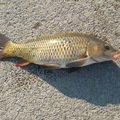 grellさんの茨城県かすみがうら市での釣果写真