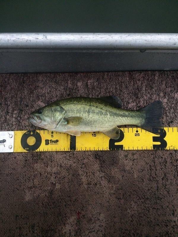 居酒屋村上さんの投稿画像,写っている魚はブラックバス