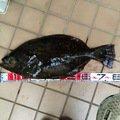 ☆マサ☆☆さんの東京都荒川区での釣果写真