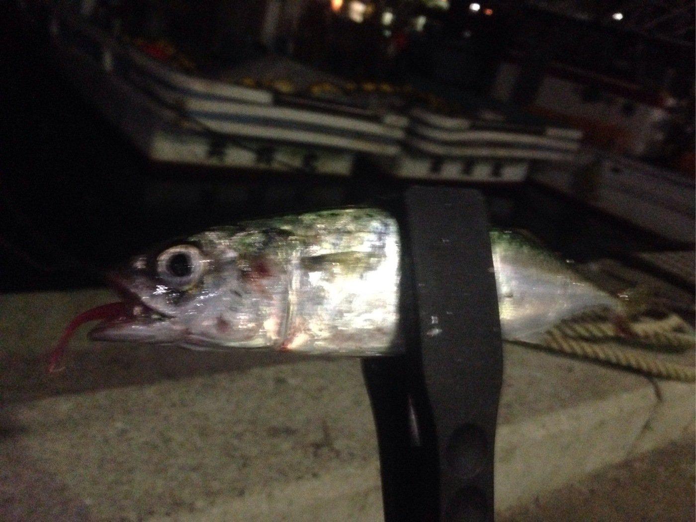 海太郎さんの投稿画像,写っている魚はマサバ
