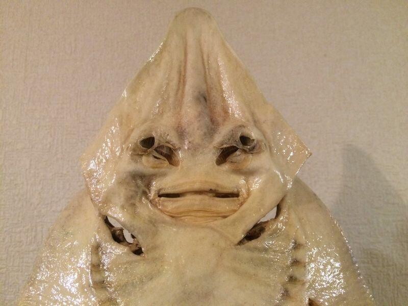 居酒屋村上さんの投稿画像,写っている魚はサカタザメ