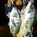 有頂天一号さんの愛知県東海市でのクロダイの釣果写真