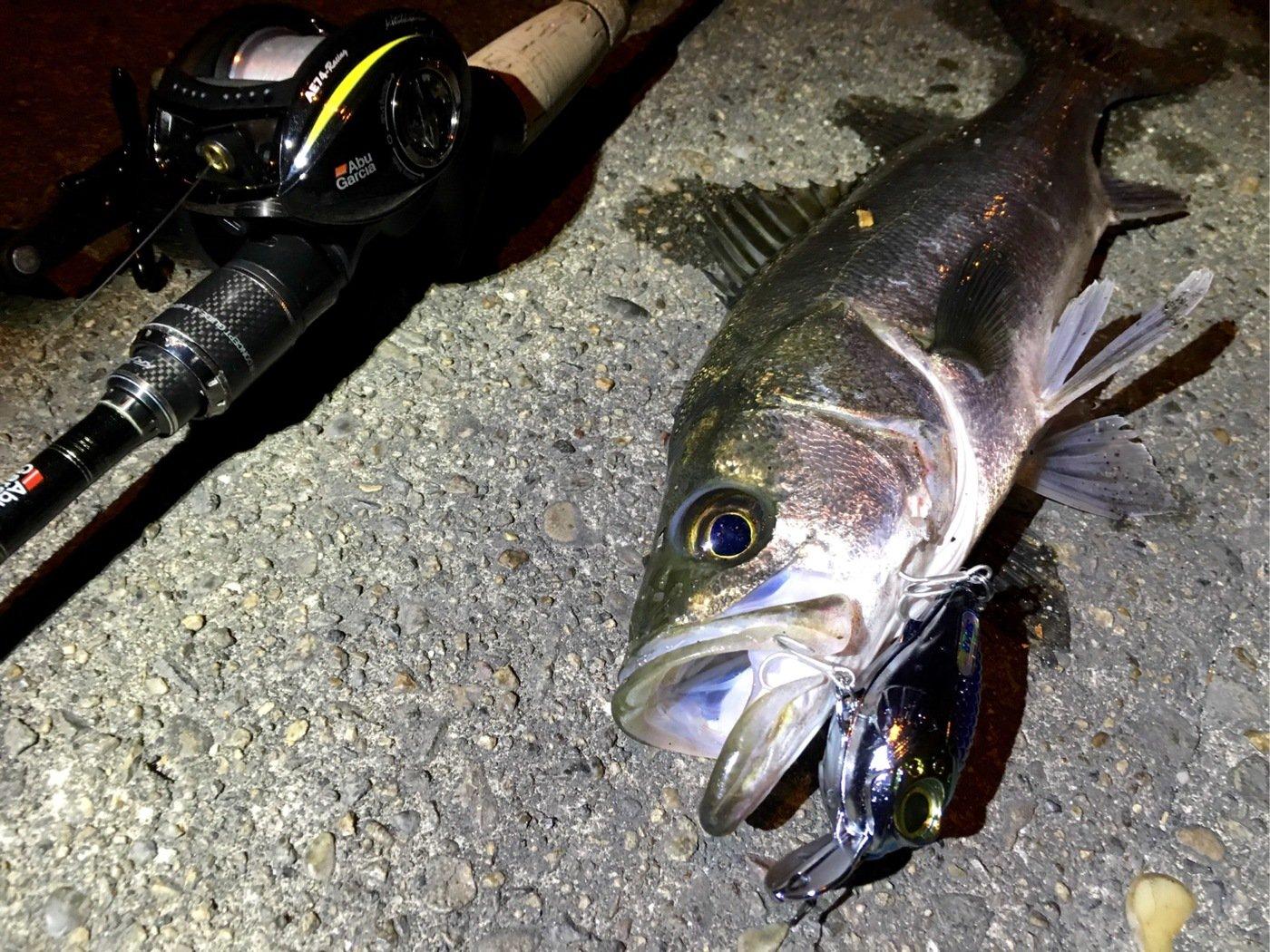 OrangUtanさんの投稿画像,写っている魚はスズキ