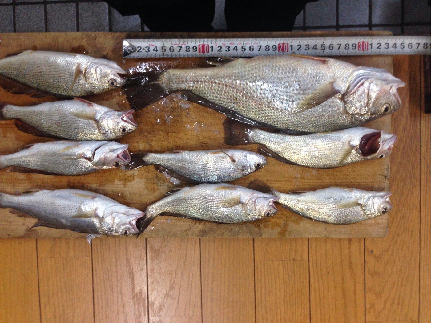 びーなさんさんの投稿画像,写っている魚はイシモチ