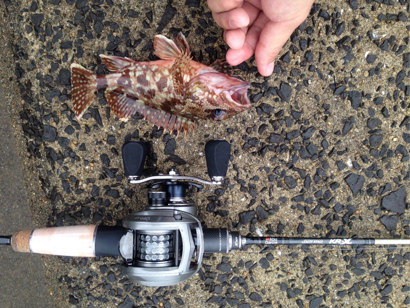 EG/TKさんの投稿画像,写っている魚はカサゴ