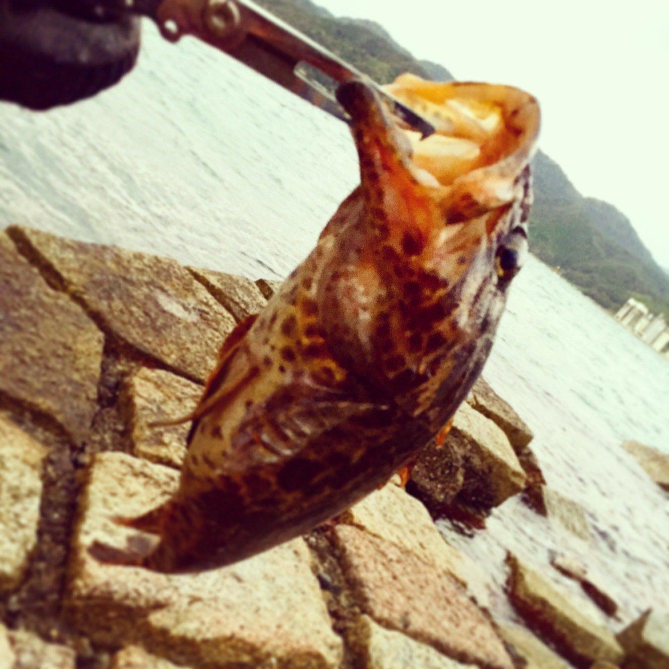 Kuniさんの投稿画像,写っている魚はカサゴ