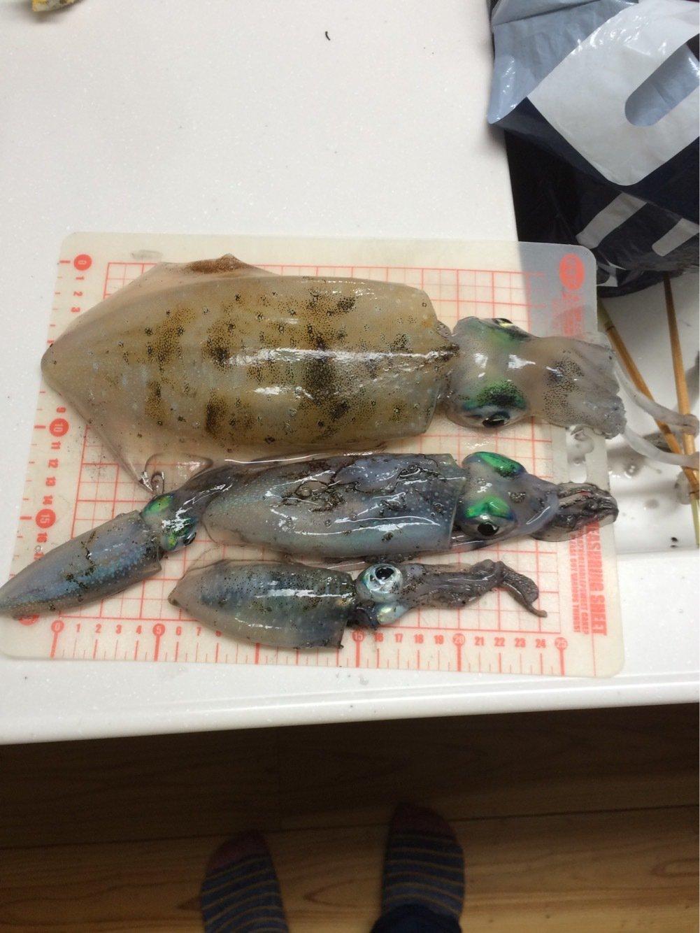 カンタダさんの投稿画像,写っている魚はアオリイカ