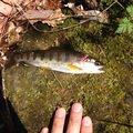 あおさんの長野県茅野市での釣果写真