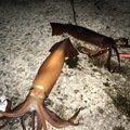 ひょーどるさんの佐賀県東松浦郡でのスルメイカの釣果写真
