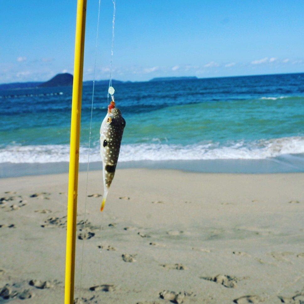 ささくみさんの投稿画像,写っている魚はクサフグ