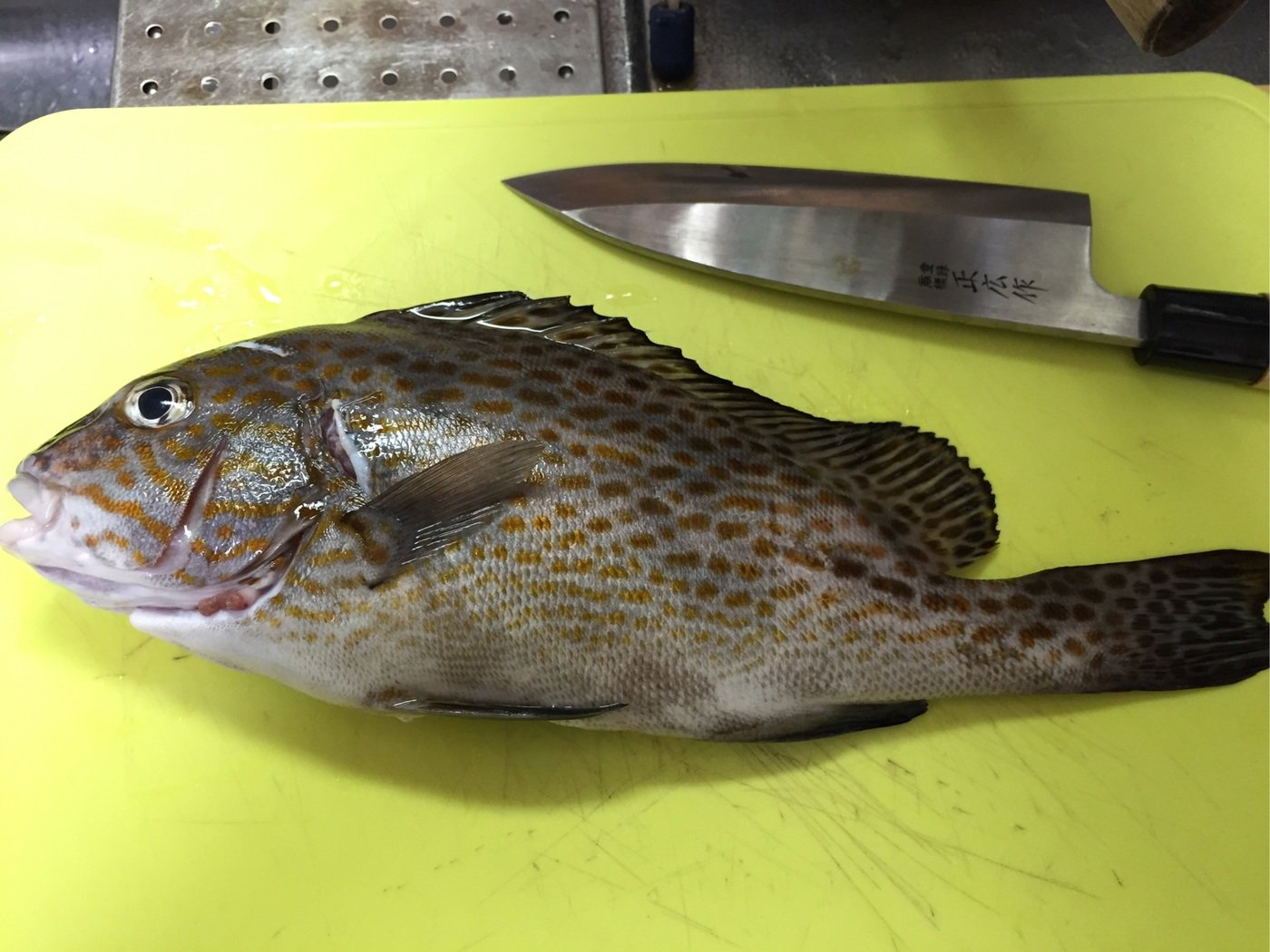 trakさんの投稿画像,写っている魚はコロダイ