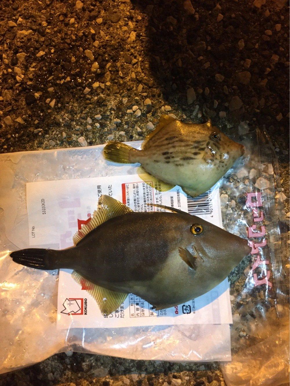 エスティマさんの投稿画像,写っている魚はカワハギ