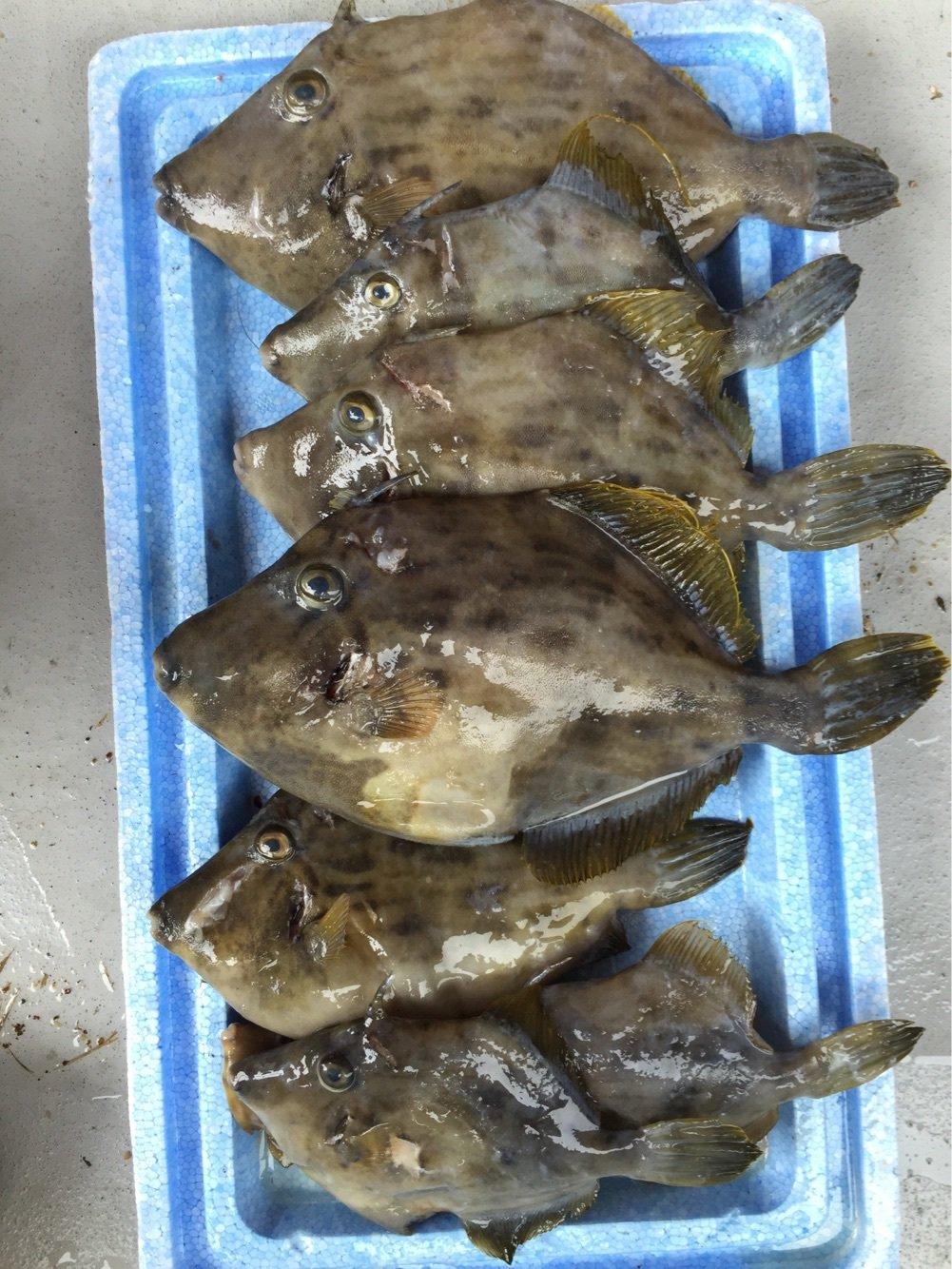 trakさんの投稿画像,写っている魚はカワハギ