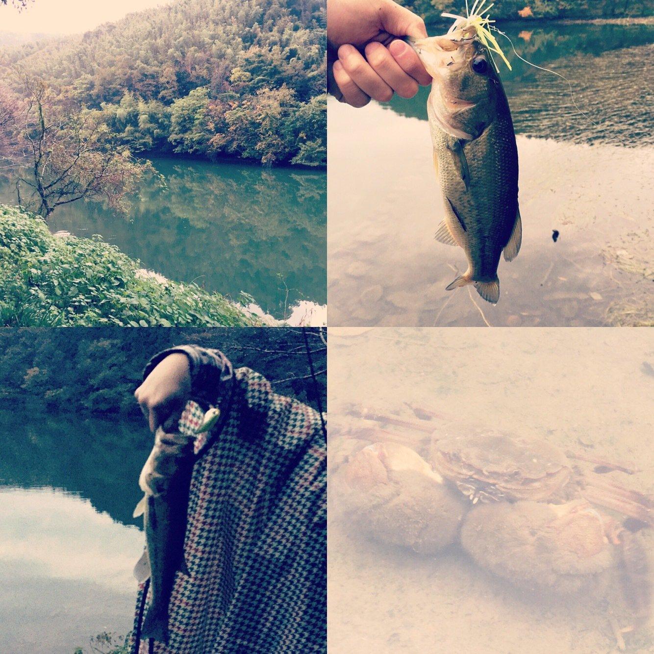nonoilyさんの投稿画像,写っている魚はブラックバス
