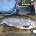 Walterさんの千葉県富里市での釣果写真