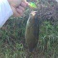 Ren.Namekataさんの福島県石川郡での釣果写真