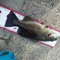 たり🐟さんの大阪府枚方市での釣果写真