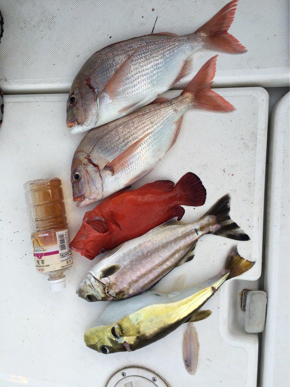 たか号さんの投稿画像,写っている魚は