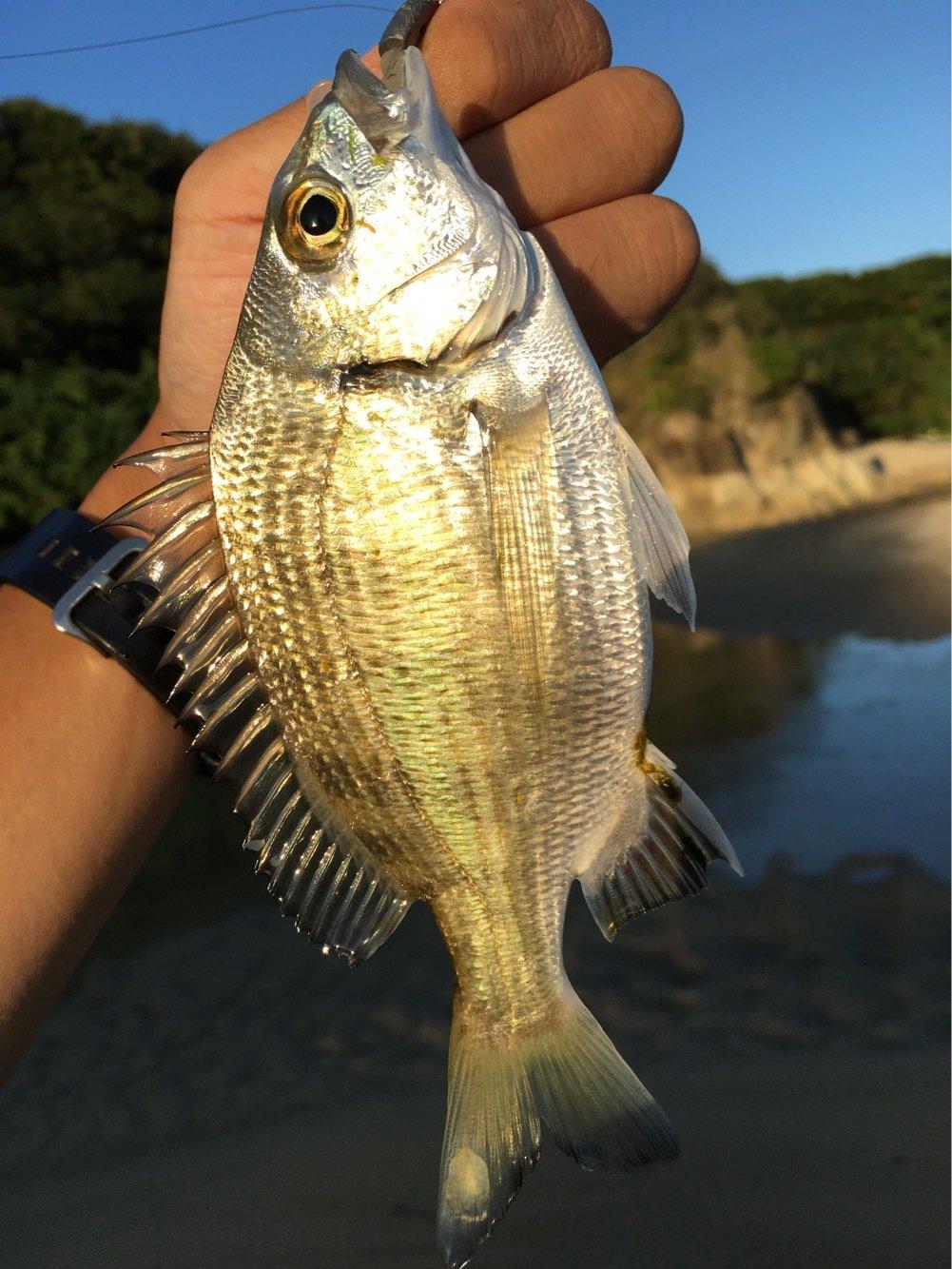 大五郎さんの投稿画像,写っている魚はキチヌ