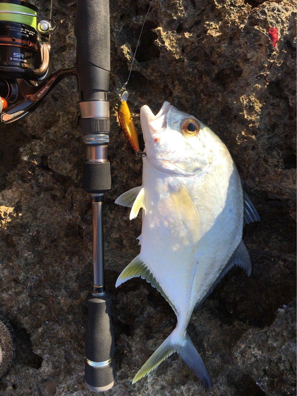 大五郎さんの投稿画像,写っている魚はロウニンアジ