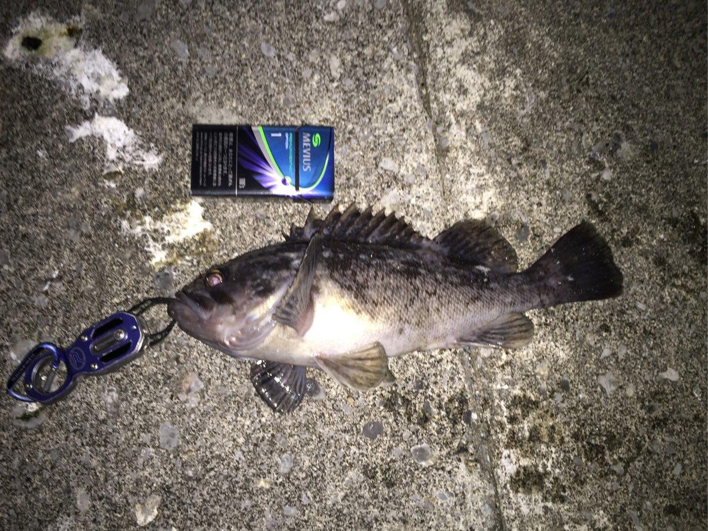 アングラー儀洋さんの投稿画像,写っている魚はクロソイ