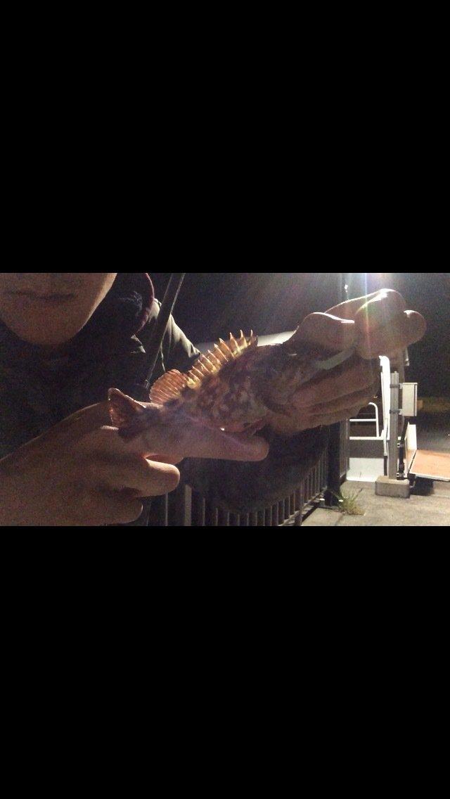 あさんの投稿画像,写っている魚はカサゴ