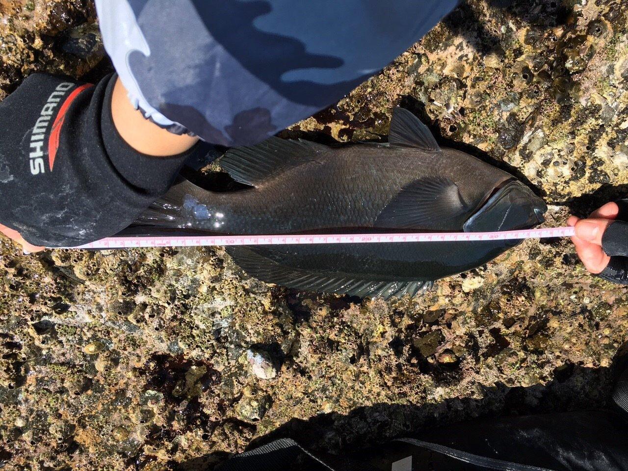 吉ぞーさんの投稿画像,写っている魚はメジナ