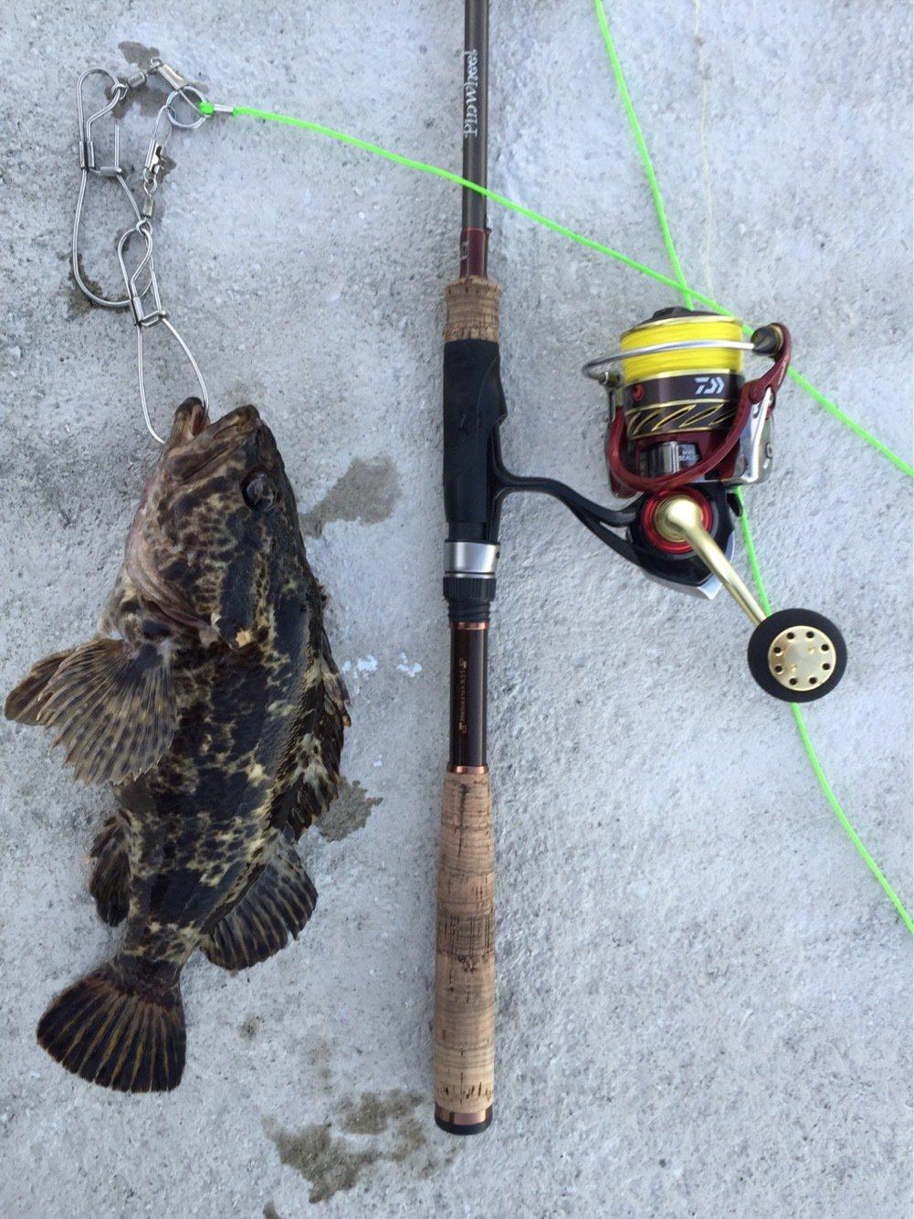 はたかつさんの投稿画像,写っている魚はタケノコメバル