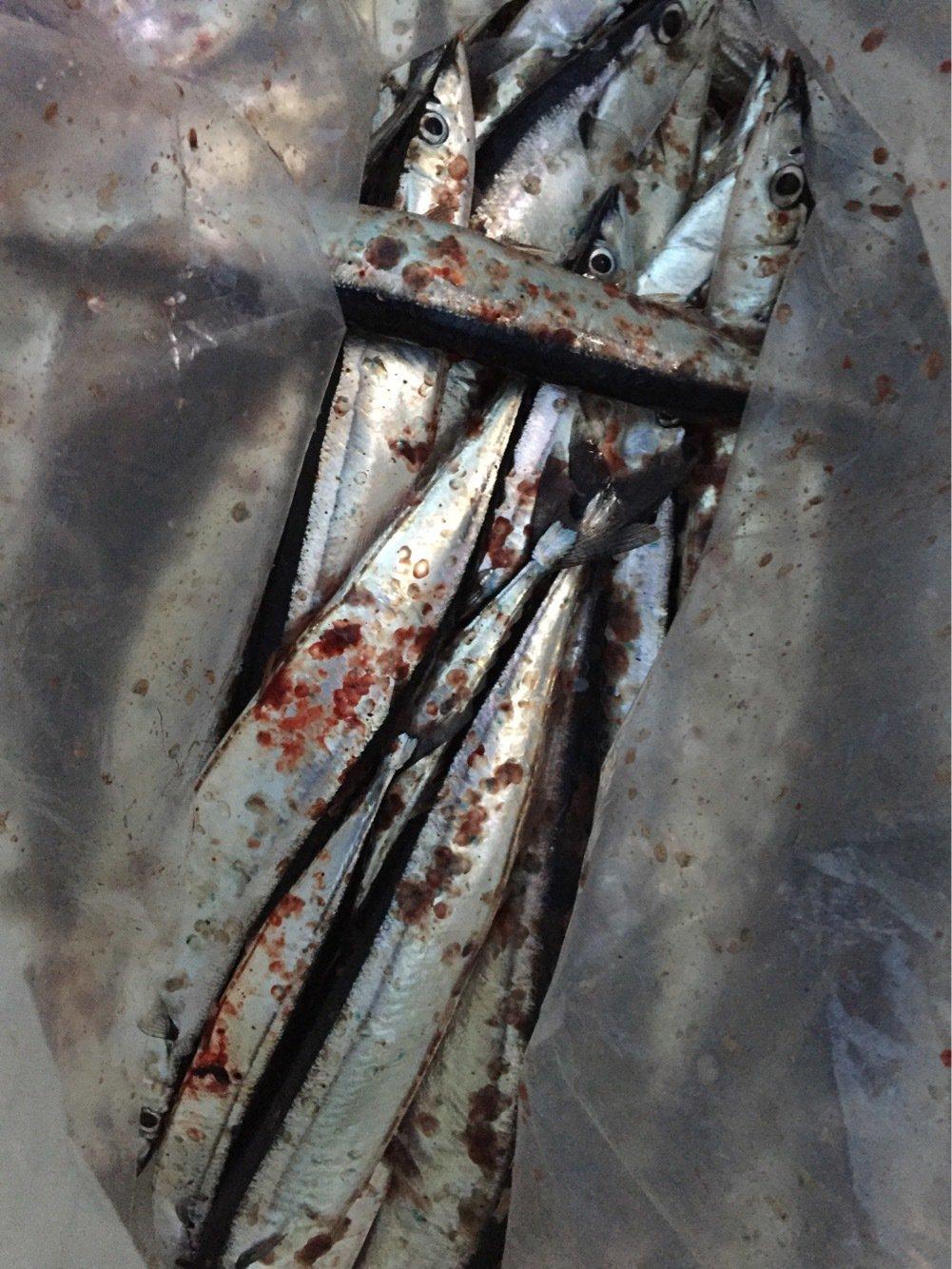 岩谷 昌幸さんの投稿画像,写っている魚はサンマ