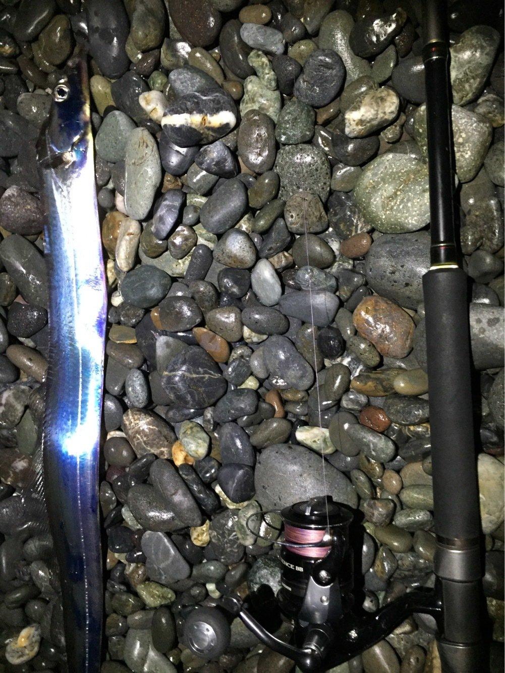 ライスよしおさんの投稿画像,写っている魚はタチウオ
