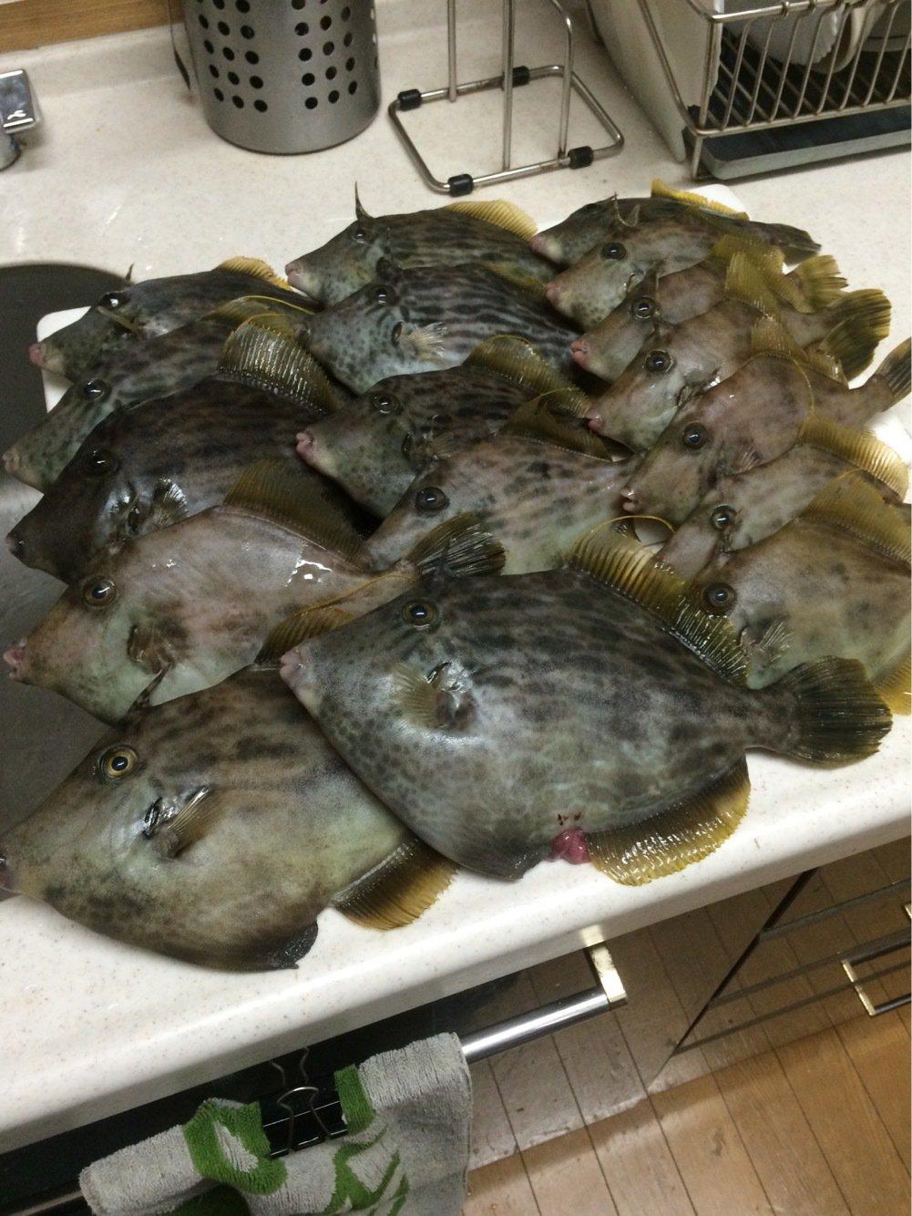 alisu38さんの投稿画像,写っている魚は