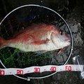 曽我 隆弘さんの高知県須崎市での釣果写真