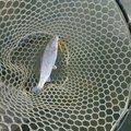 テンヤワンヤーさんの福島県須賀川市での釣果写真
