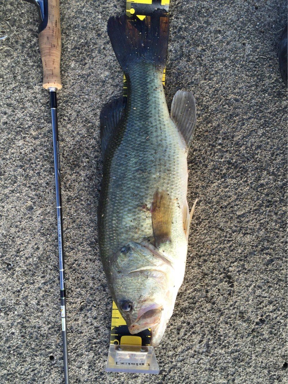 ひでくろうさんの投稿画像,写っている魚はブラックバス