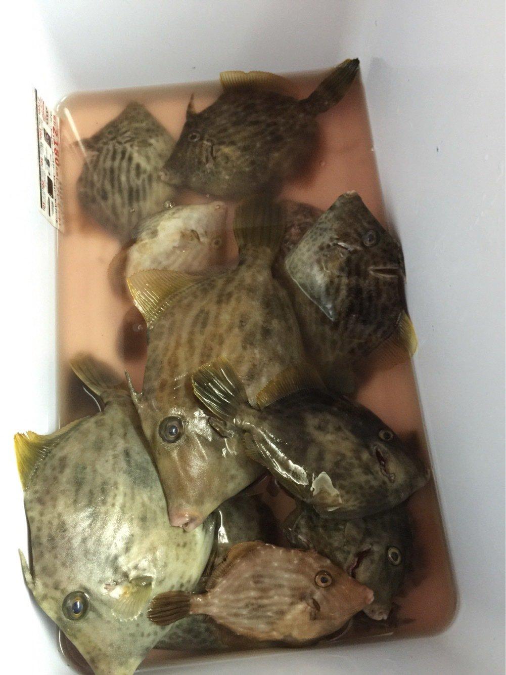 EBINAさんの投稿画像,写っている魚はカワハギ