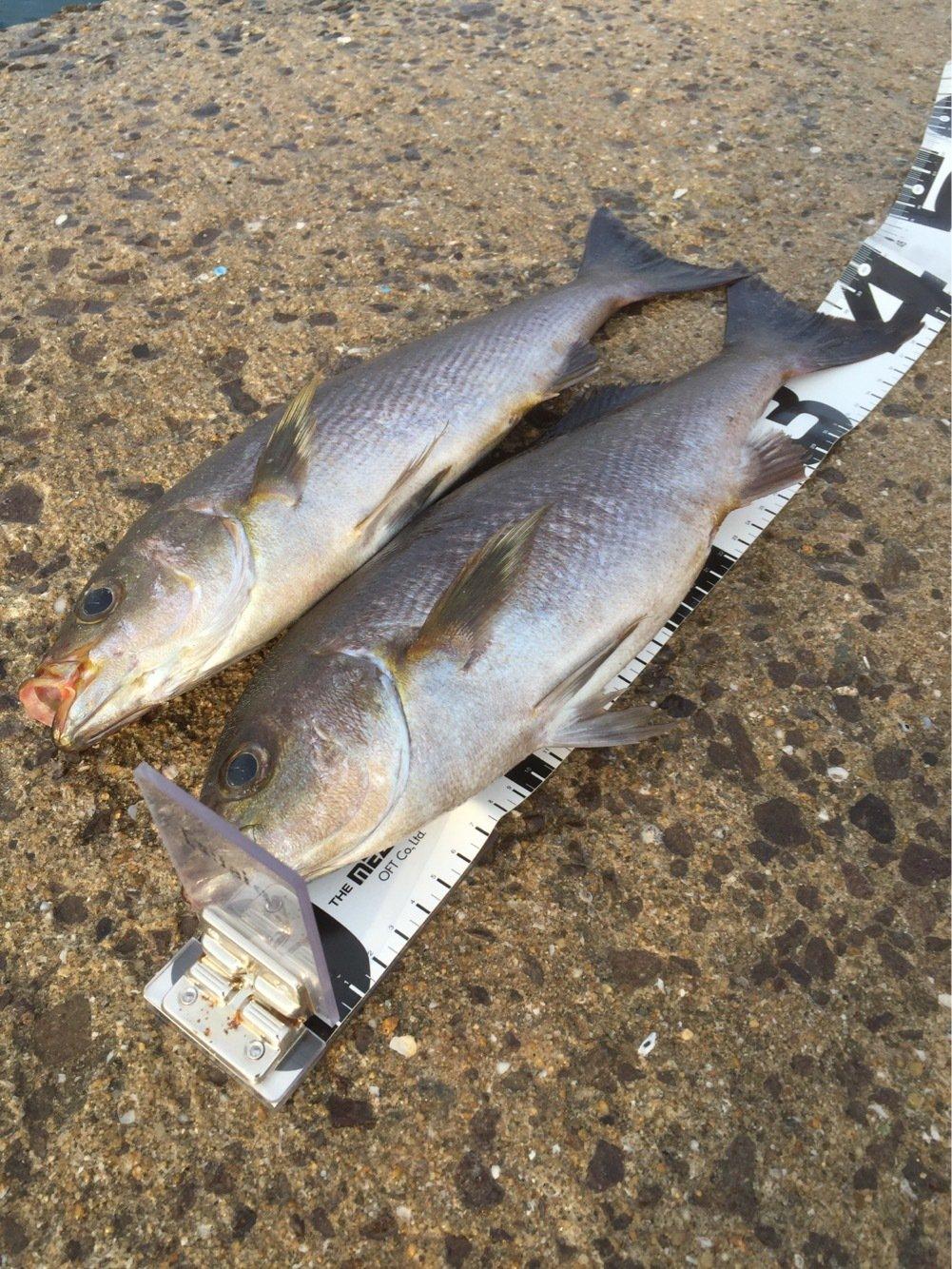 Ryutoさんの投稿画像,写っている魚はイサキ