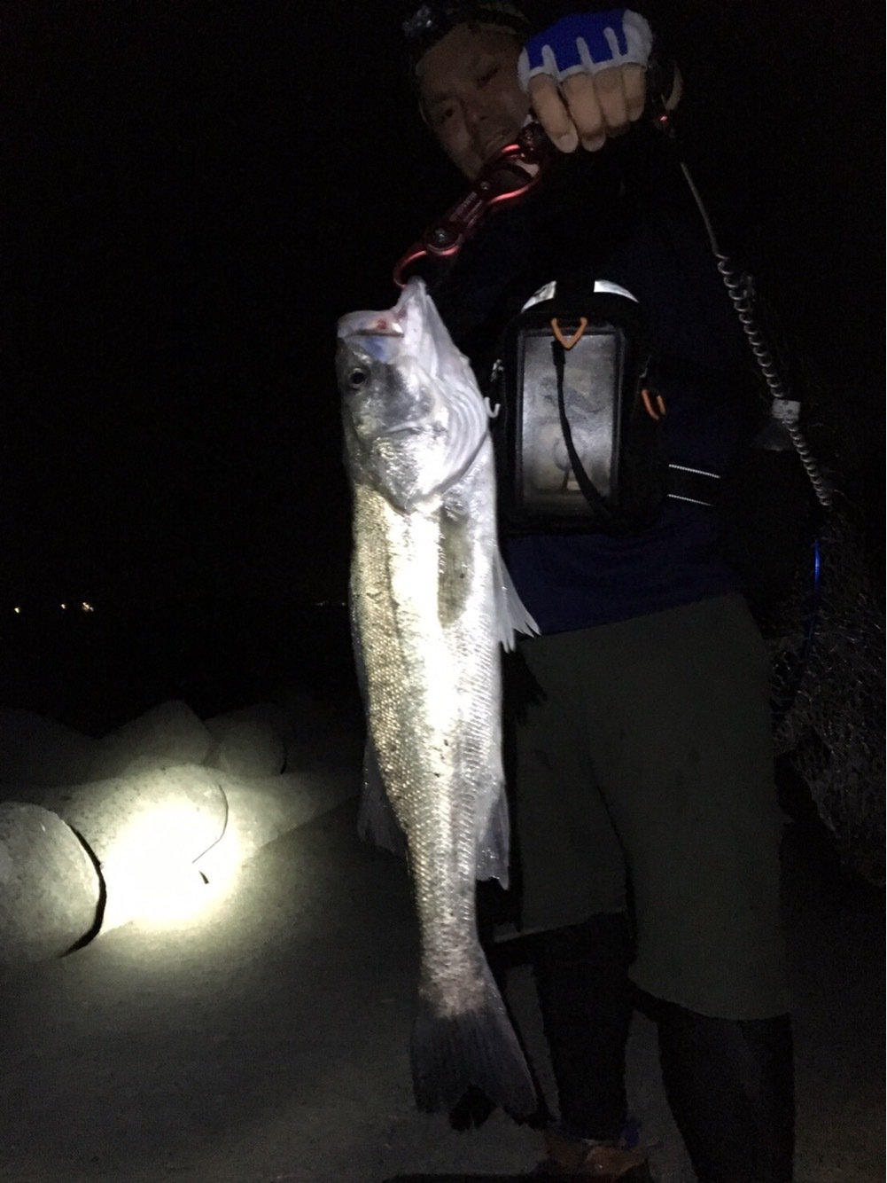 ホッタマンさんの投稿画像,写っている魚はスズキ