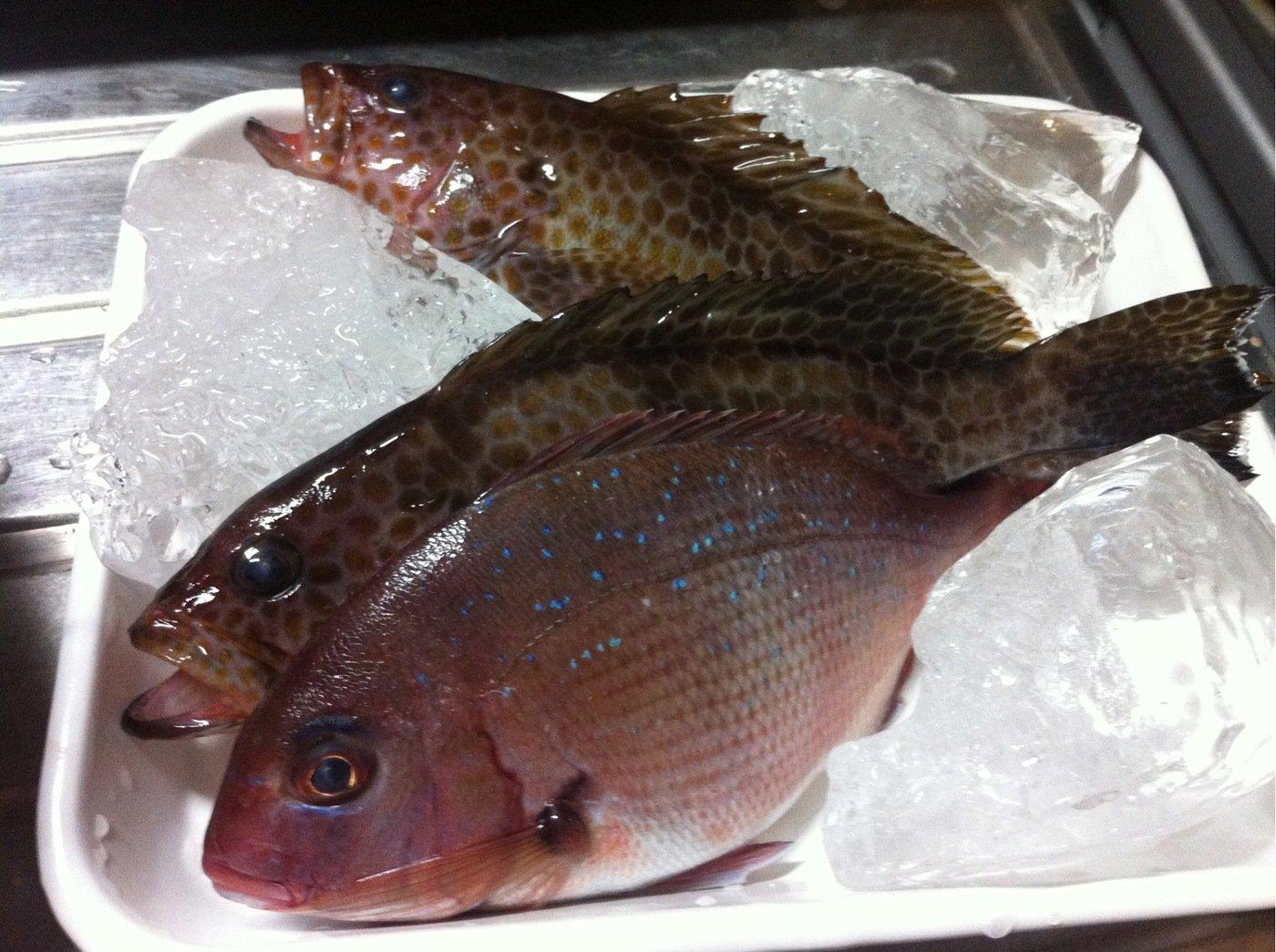 KJさんの投稿画像,写っている魚はマダイ