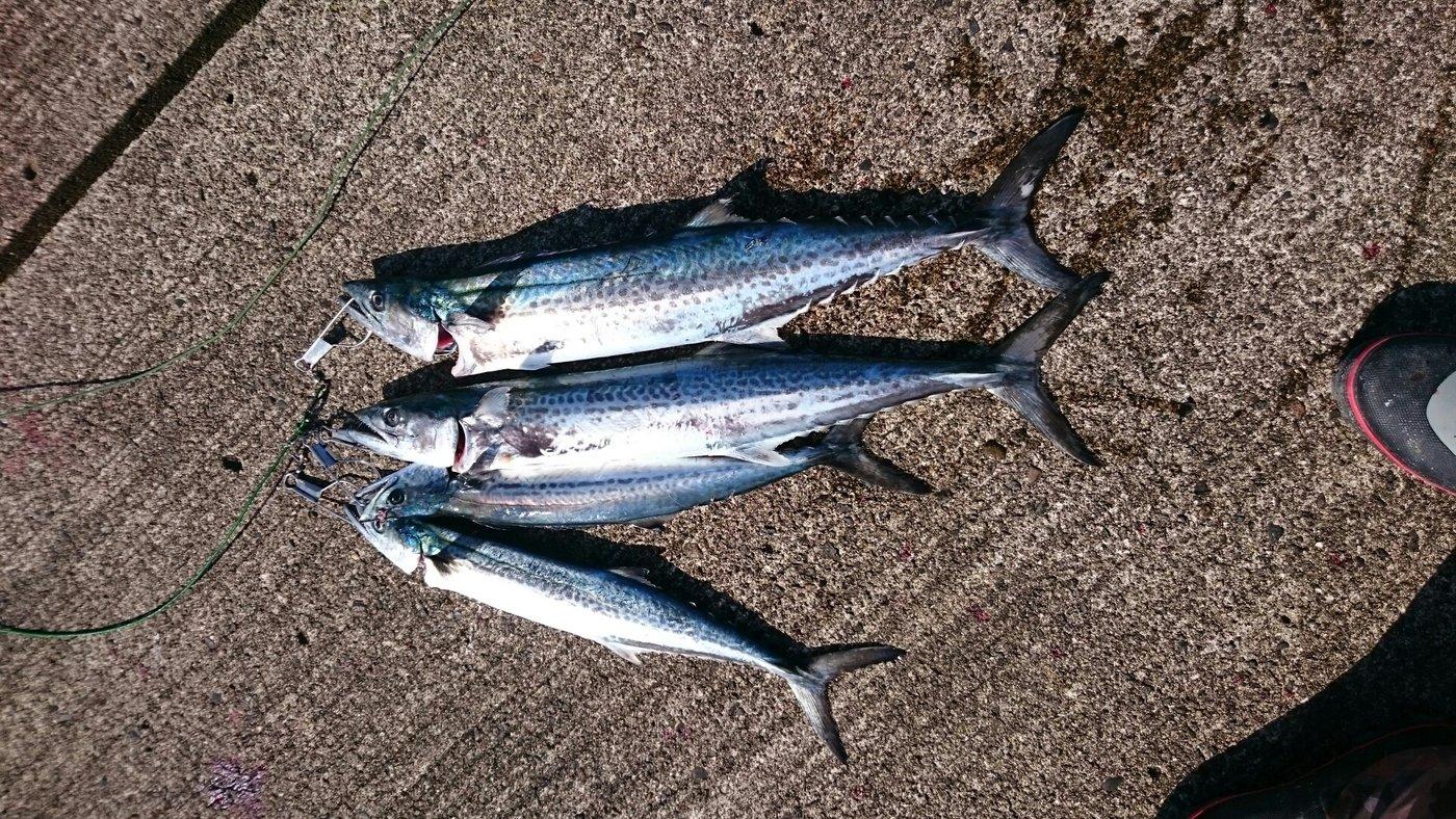 浩行さんの投稿画像,写っている魚はサワラ