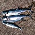浩行さんの新潟県燕市での釣果写真