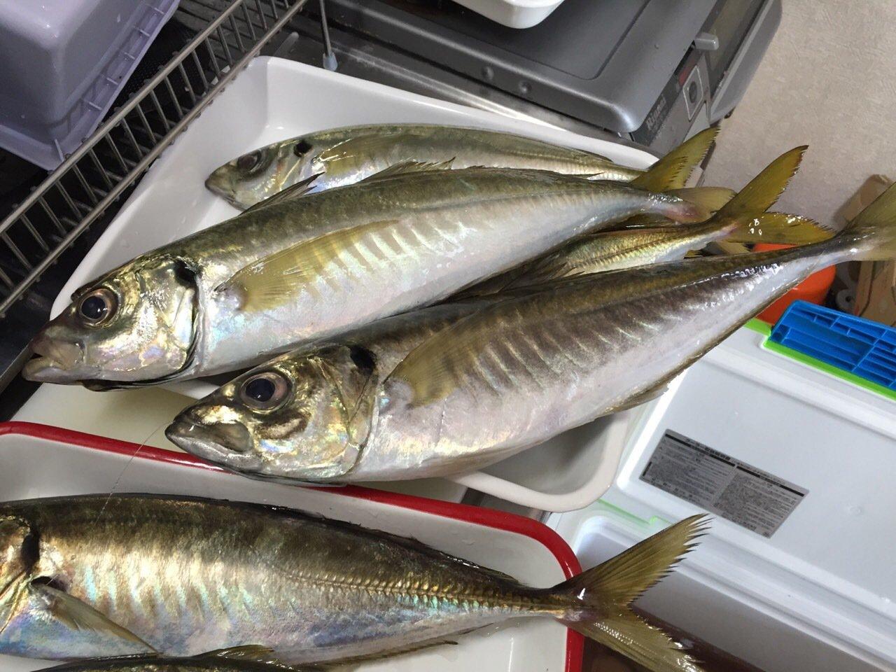 KJさんの投稿画像,写っている魚はアジ